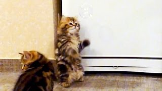 Kittens and Soap Bubbles . Cute and Funny Cats