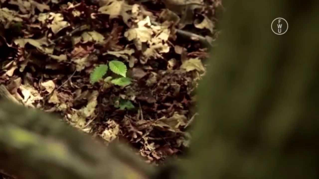 FWU - Ökosystem Baum - Trailer - YouTube