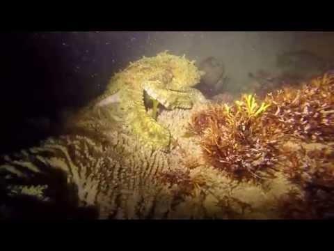 Malibu Lobster Night Dive
