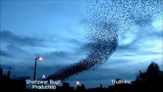 Birds Debunk Globe Earth - FLAT EARTH