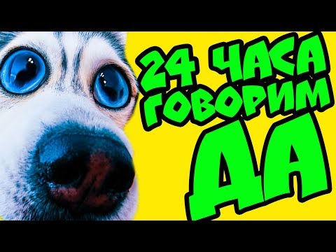24 часа ГОВОРЮ ДА! ???? СЪЕМКИ КЛИПА 400К БЭКСТЕЙДЖ (Хаски Бандит) Говорящая собака