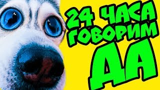 24 часа ГОВОРЮ ДА! 😲 СЪЕМКИ КЛИПА 400К БЭКСТЕЙДЖ (Хаски Бандит) Говорящая собака