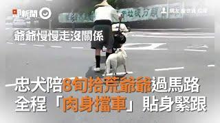 忠犬陪8旬拾荒爺爺過馬路 全程「肉身擋車」貼身緊跟