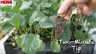 The Best Seed Starting Trays On The Planet