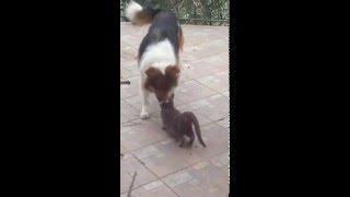 Animal love XXX