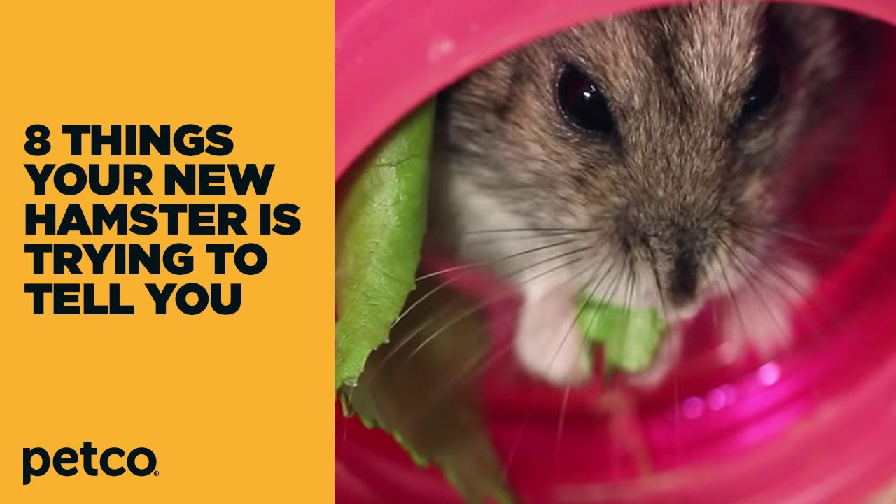 8 Things Your New Hamster is Trying to Tell You: New Pet Tips (Petco)