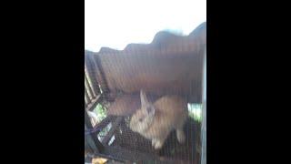 VERSI FULL 5 Menit VIDEO HOT HANNA ANISSA