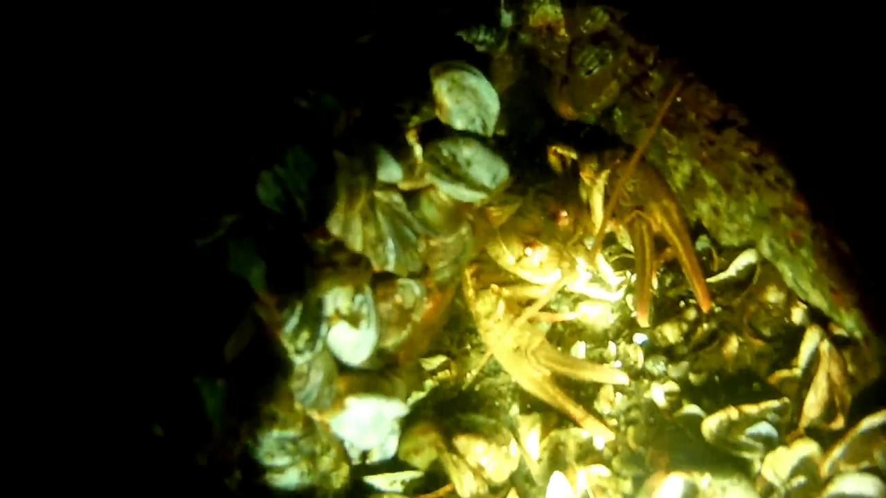 Подводная охота на Днепре ночью. Норы сома Голавль. Нашел пистолет под водой