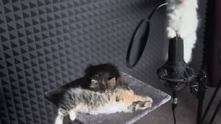Download Cute KITTENS Sing In AUTOTUNE Mp3 and Videos