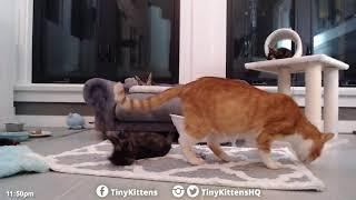 Impudent kittens!  TinyKittens.com