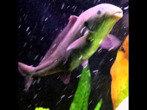 Freshwater Fish Aquarium Fish Dolphin Fish For Sell Mumbai Youtube