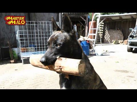 Diesel (in memory of our dog)