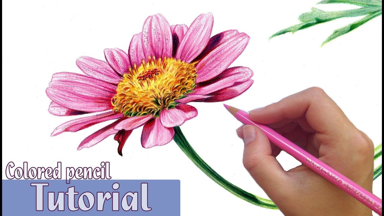 How To Draw And Shade A Flower In Colored Pencil Youtube