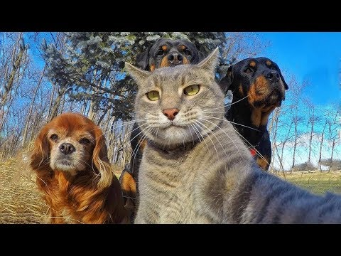 Funny Cats NEW Compilation 2017 HD - with Dog / animals