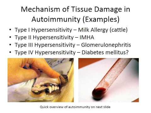 MBC Online Vet Tech Review 3.1 - Autoimmunity
