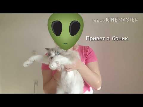 Танцующий кот  Банифаций
