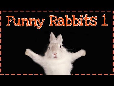 ŚMIESZNE KRÓLIKI ODC.1 | Uszatkowe Rady | Funny rabbits | Funny animals