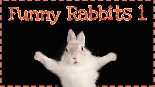 ŚMIESZNE KRÓLIKI ODC.1   Funny rabbits   Funny animals   Uszatkowe Rady