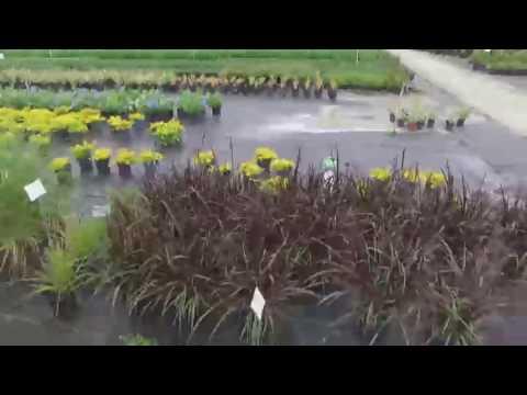 Aventura Nursery Landscape Inc
