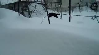 Кот по сугробу идет домой. Суровый северный кот, которому снег нипочем.