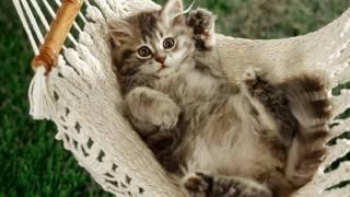 Слайд-шоу: Кошки