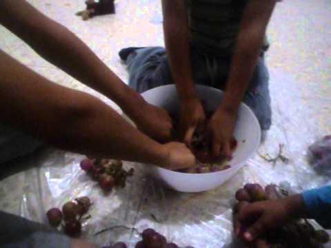מכינים מיץ ענבים 1