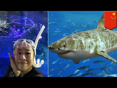 Wanita diserang hiu ketika latihan selam - TomoNews