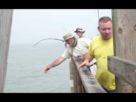 Hammer Head Shark Caught Off Bob Hall Pier