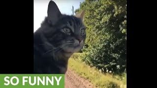 Cat sticks head out of car window just like a dog