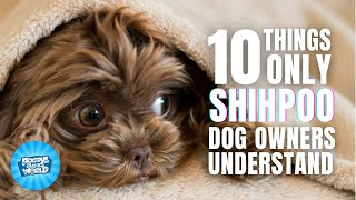 10 Things Only Shih Poo Dog Owners Understand | Poodle Mixes World