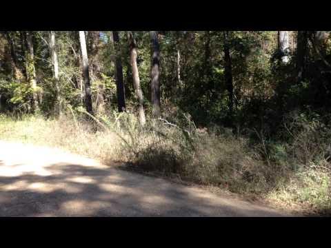 Sam Houston National Forest - Deer Hunting - November 2013