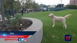 WeHoTV NewsByte: West Hollywood Park Dog Parks