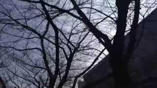 2014年2月18日に、東急東横線 中目黒駅の近くを流れる、目黒川の桜並木...
