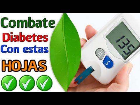 ¿tienes-diabetes?-sólo-hierve-estas-hojas-y-combate-tu-problema