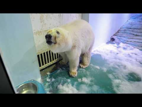 """""""World's Saddest Polar Bear"""" Moved To Ocean Park After Outpouring Of Outrage Towards A Chinese Mall"""