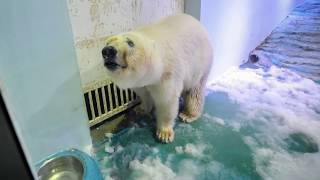 """""""World's Saddest Polar Bear"""" Moved To Ocean Park After Outpouring Of Outrage Towards A Chinese Mall thumbnail"""