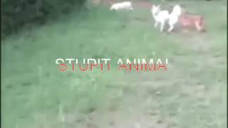 Самые глупые и тупые животные-stupit animal