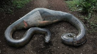 Dieser Mann ist in der riesigen Anakonda aufgewacht!