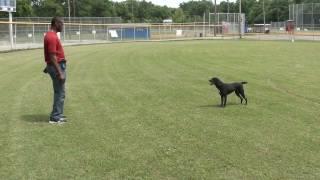 Guy Nashville Dog Trainer 033: Sit, Lie Down & Stand