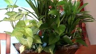 Do-it-yourself : How To Pot Plants