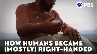 How Humans Became (Mostly) Right-Handed