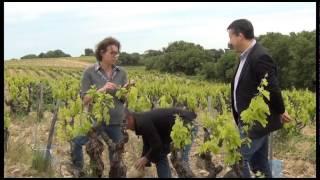 Rencontre avec le viticulteur - Châteauneuf-du-Pape, Domaine de la Graveirette
