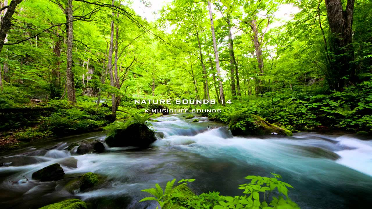 nature relaxing most sounds sound