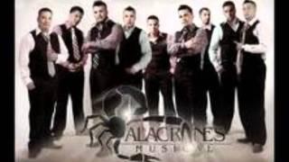 Los 500 Novillos-Alacranes Musical