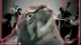 talking cat jazz cat