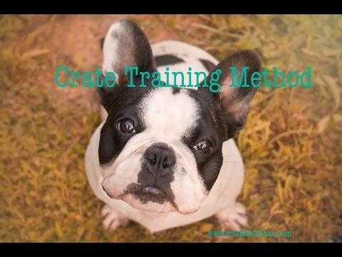 Part 4 Train My French Bulldog Crate Training Method | Dog Training Tips