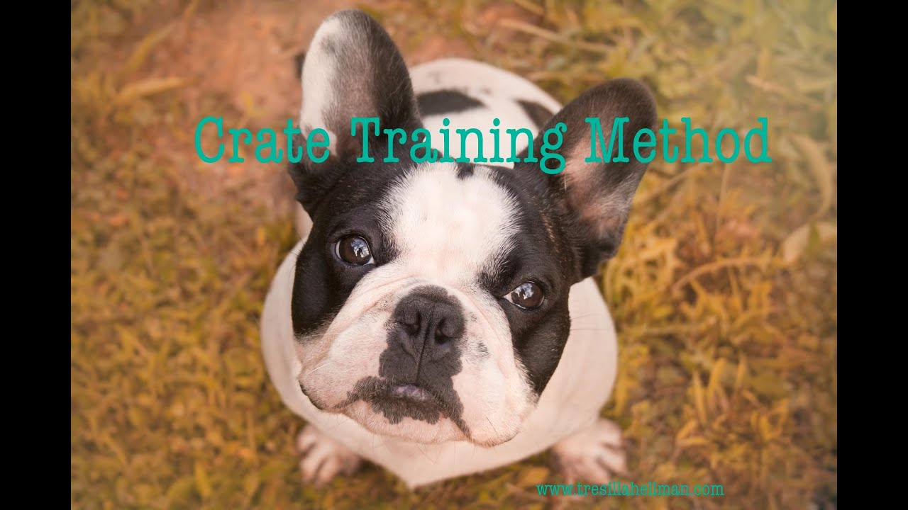 french bulldog crate training part 4 train my french bulldog crate training method dog 496