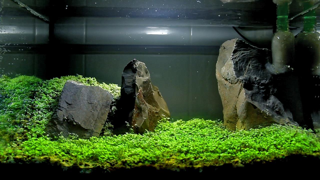 Carpet Seeds Aquascape Setup Youtube