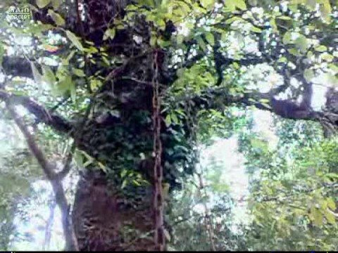 CHAIN GROW WITH TREE- soul of the first Martyr of Wayanad