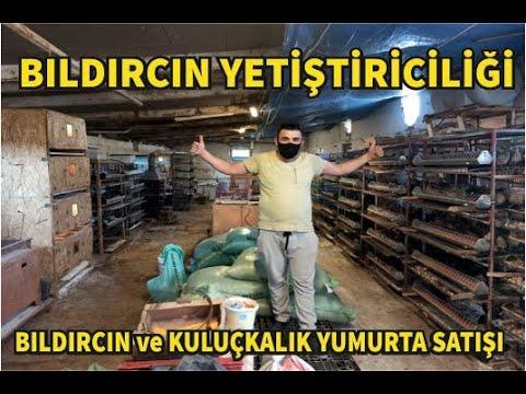 BILDIRCIN YETİŞTİRİCİLİĞİ ( Bıldırcın ve Kuluçkalık Yumurta Satışı ) #istanbul #bahçelievler